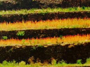 qunioa field